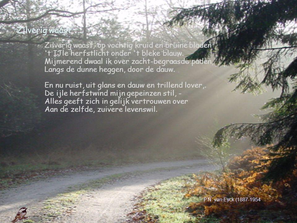Zilverig waast Zilverig waast, op vochtig kruid en bruine bladen 't IJle herfstlicht onder 't bleke blauw. Mijmerend dwaal ik over zacht-begraasde pad
