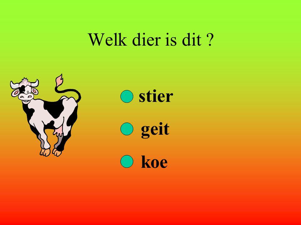 Welk dier is dit stier geit koe