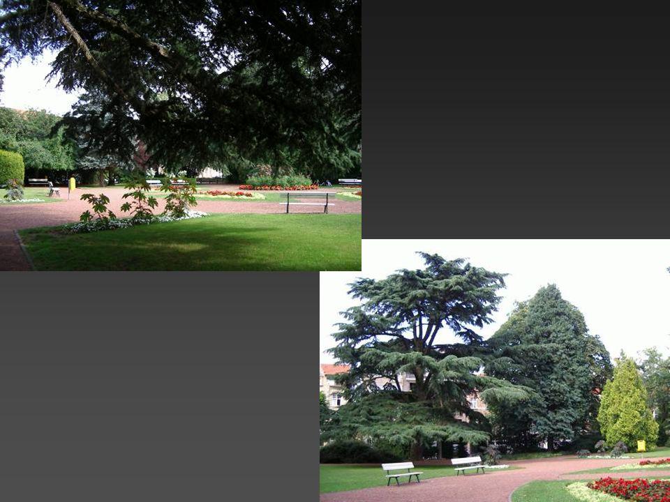 Het Astridpark is een restant van de tuin van het Bisschoppelijk Paleis… Een rustige plaats om te vertoeven