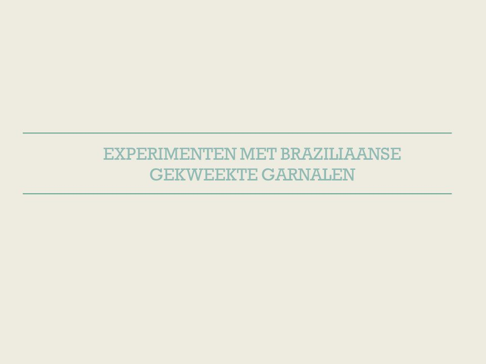 EXPERIMENTEN MET BRAZILIAANSE GEKWEEKTE GARNALEN