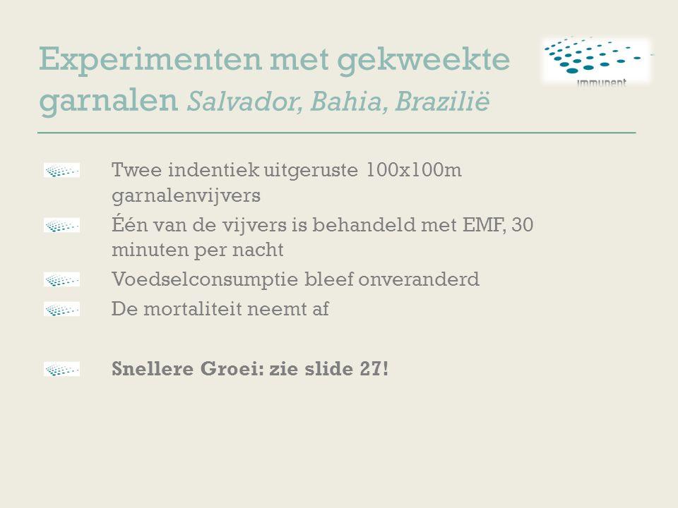 Experimenten met gekweekte garnalen Salvador, Bahia, Brazilië Twee indentiek uitgeruste 100x100m garnalenvijvers Één van de vijvers is behandeld met E