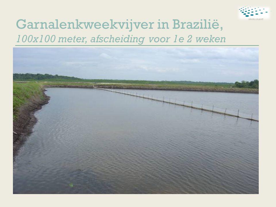 Garnalenkweekvijver in Brazilië, 100x100 meter, afscheiding voor 1e 2 weken