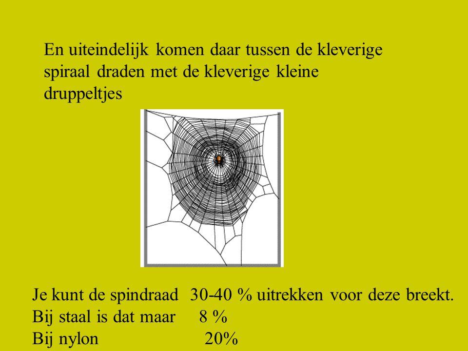 En uiteindelijk komen daar tussen de kleverige spiraal draden met de kleverige kleine druppeltjes Je kunt de spindraad 30-40 % uitrekken voor deze breekt.