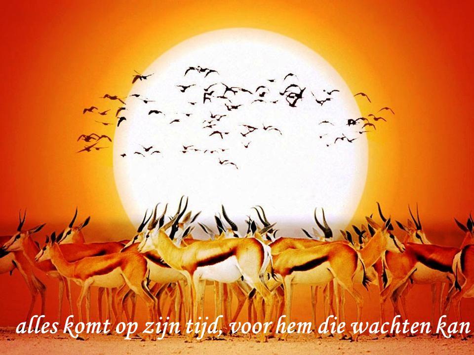 leef vandaag, niet morgen morgen is het weer vandaag