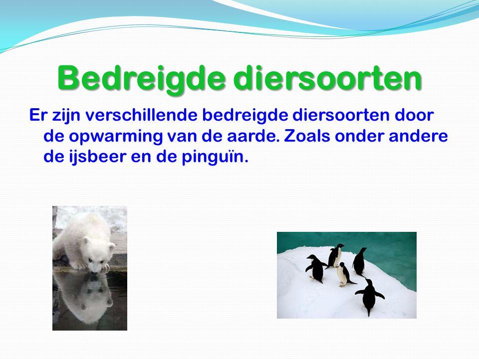 Bedreigde diersoorten Er zijn verschillende bedreigde diersoorten door de opwarming van de aarde. Zoals onder andere de ijsbeer en de pinguïn.
