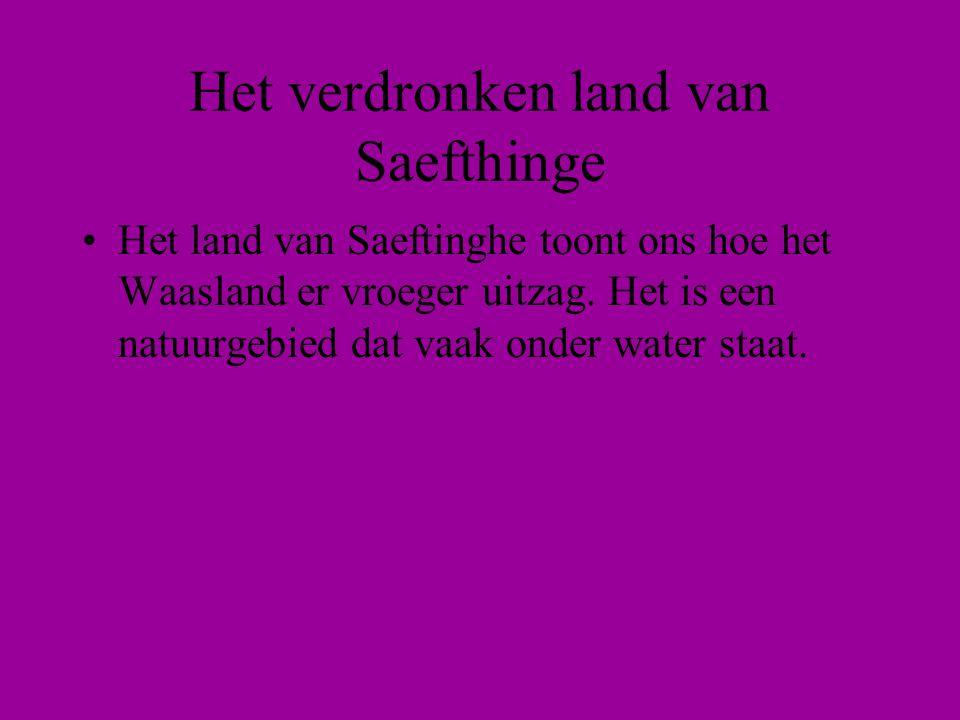 •Het land van Saeftinghe toont ons hoe het Waasland er vroeger uitzag.