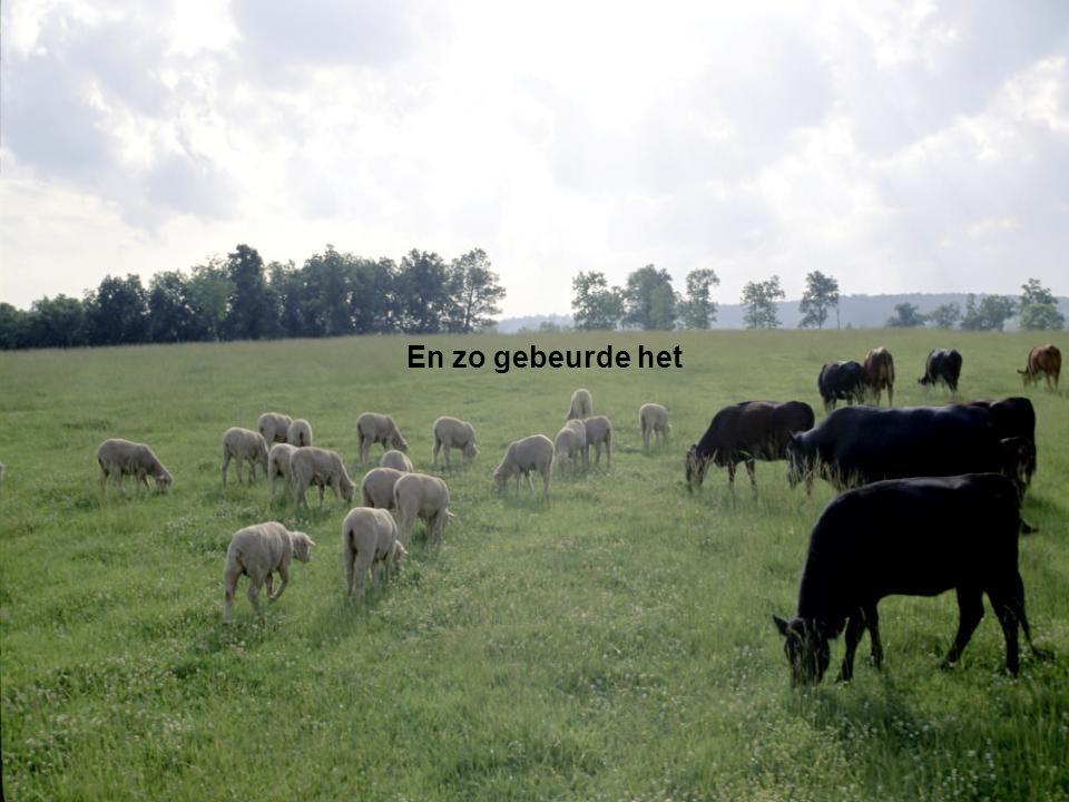 God God zei: 'De aarde moet allerlei levende wezens voortbrengen: vee, kruipende dieren en wilde dieren.'