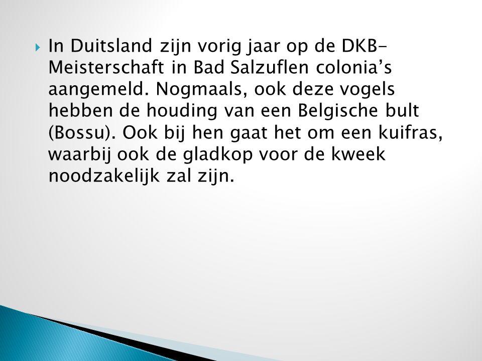  In Duitsland zijn vorig jaar op de DKB- Meisterschaft in Bad Salzuflen colonia's aangemeld. Nogmaals, ook deze vogels hebben de houding van een Belg