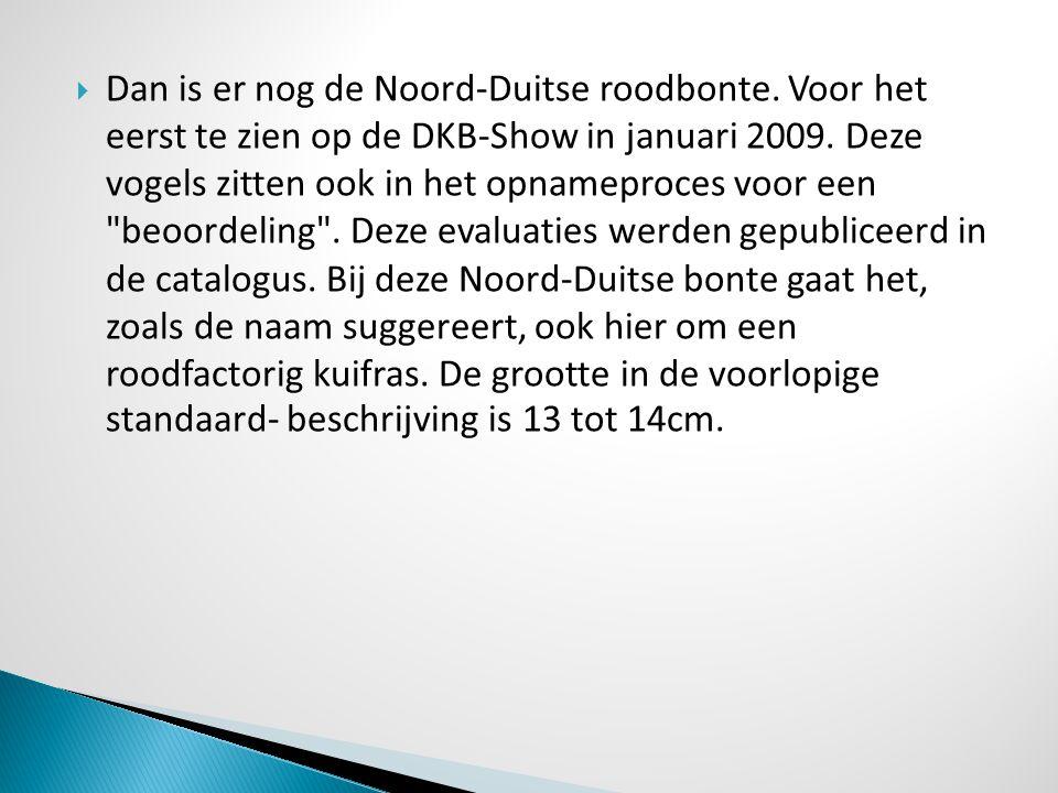  Dan is er nog de Noord-Duitse roodbonte. Voor het eerst te zien op de DKB-Show in januari 2009. Deze vogels zitten ook in het opnameproces voor een