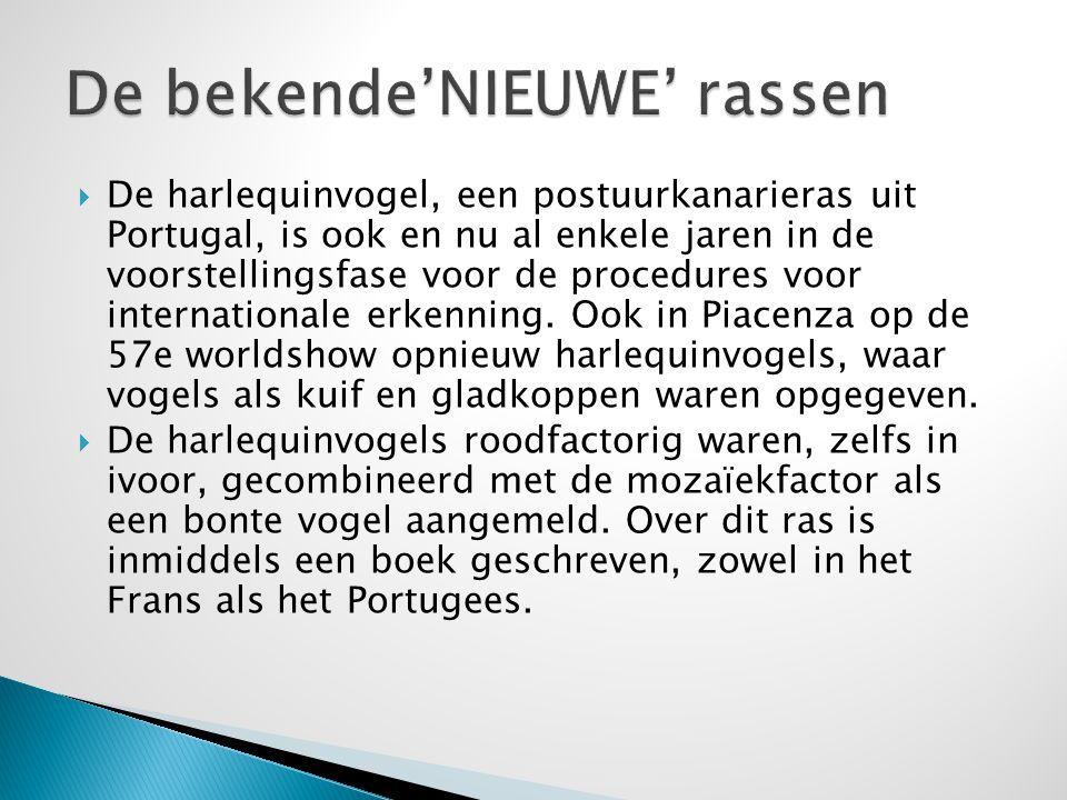  De harlequinvogel, een postuurkanarieras uit Portugal, is ook en nu al enkele jaren in de voorstellingsfase voor de procedures voor internationale e