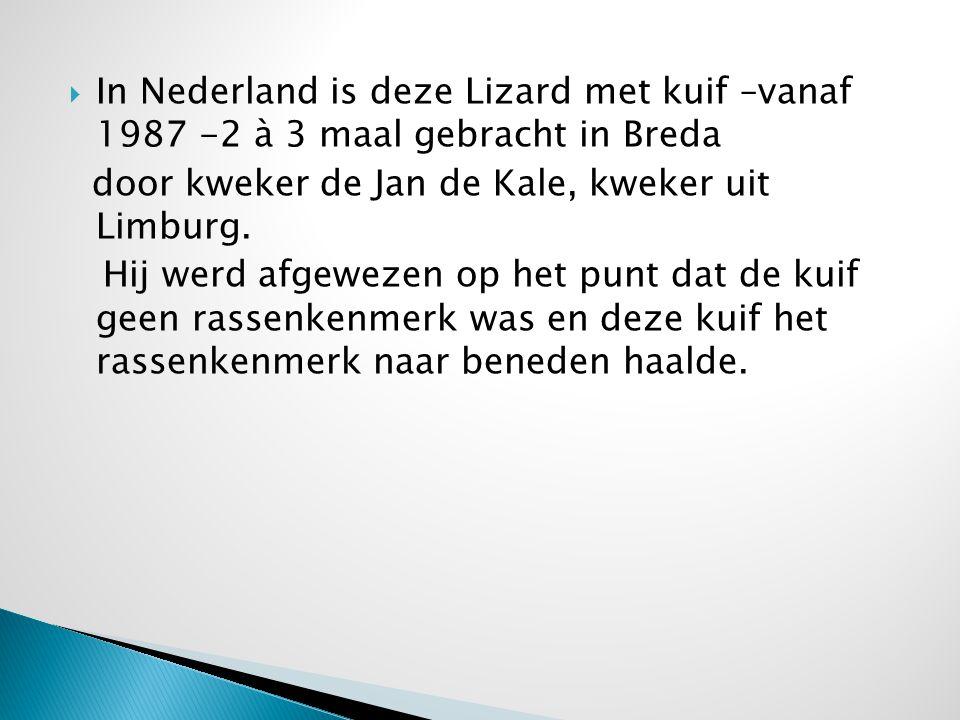  In Nederland is deze Lizard met kuif –vanaf 1987 -2 à 3 maal gebracht in Breda door kweker de Jan de Kale, kweker uit Limburg. Hij werd afgewezen op