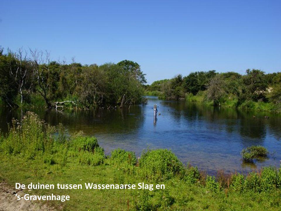De duinen tussen Wassenaarse Slag en 's-Gravenhage