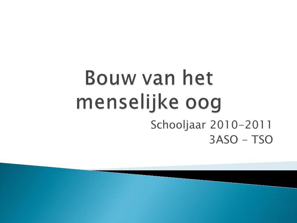 Schooljaar 2010-2011 3ASO - TSO