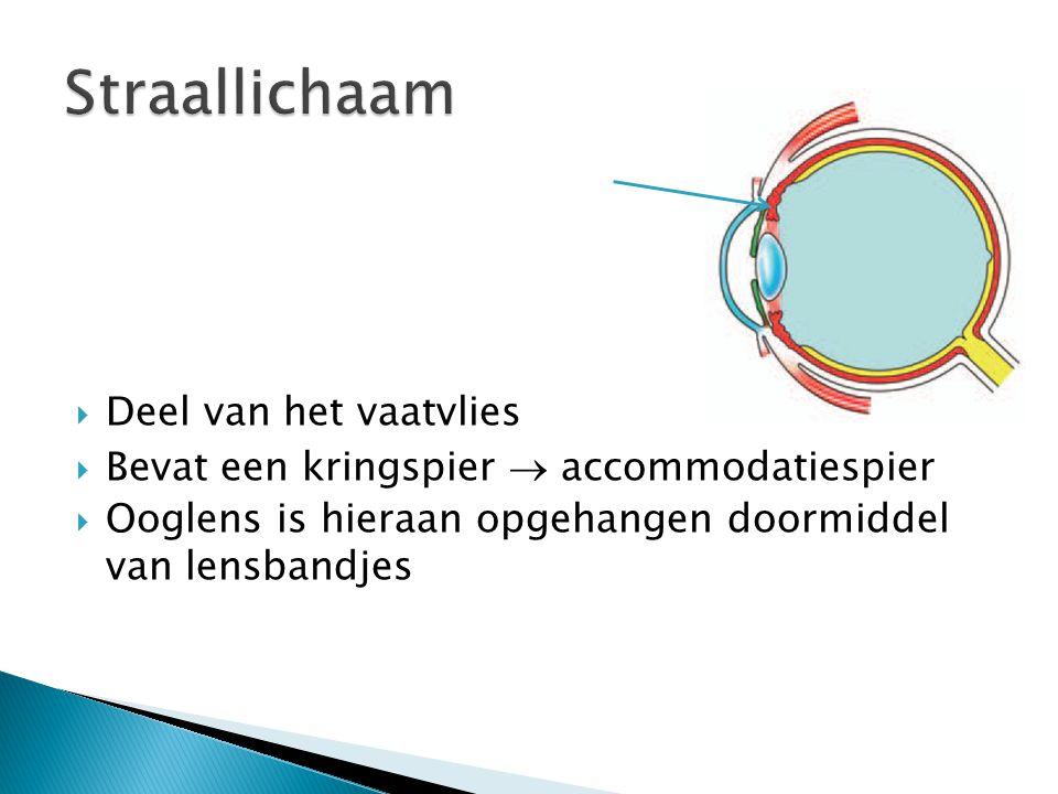  Deel van het vaatvlies  Bevat een kringspier  accommodatiespier  Ooglens is hieraan opgehangen doormiddel van lensbandjes