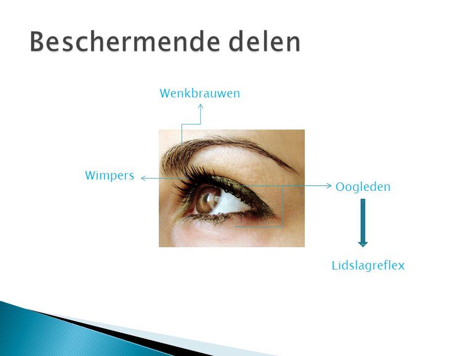 Beschermende delen Wenkbrauwen Wimpers Oogleden Lidslagreflex