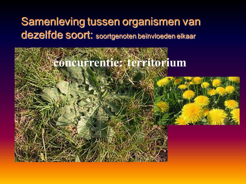 Samenleving tussen organismen van dezelfde soort: soortgenoten beïnvloeden elkaar concurrentie: territorium