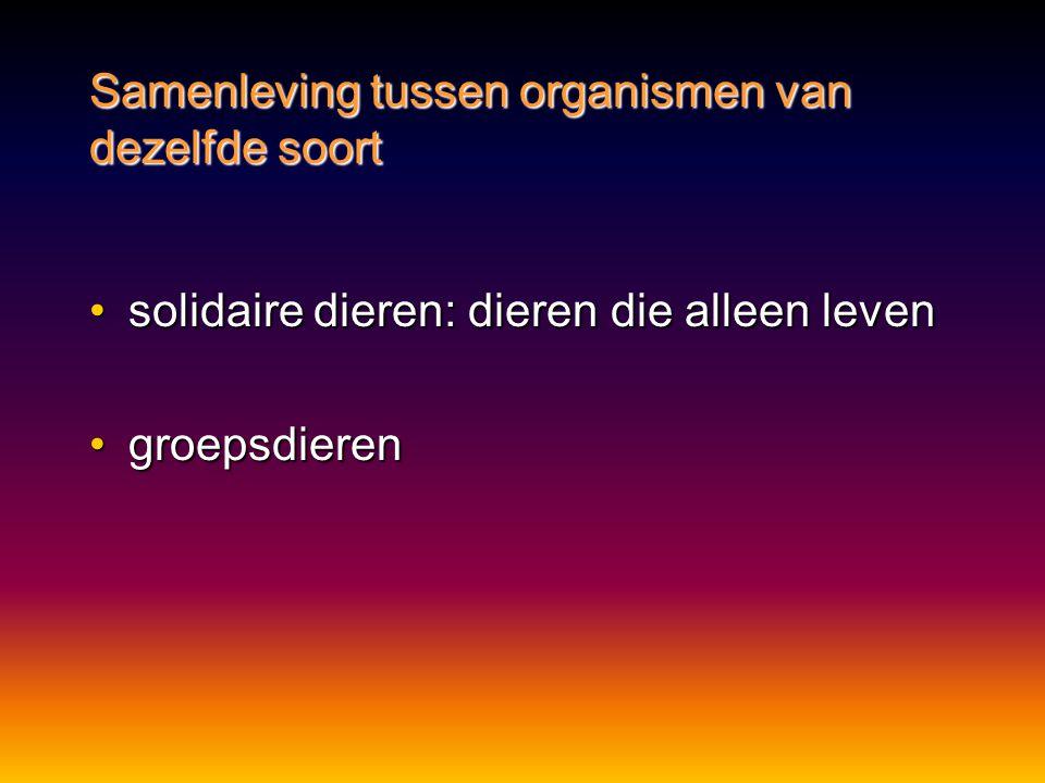 •solidaire dieren: dieren die alleen leven •groepsdieren Samenleving tussen organismen van dezelfde soort