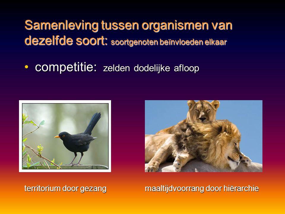 Samenleving tussen organismen van dezelfde soort: soortgenoten beïnvloeden elkaar •competitie: zelden dodelijke afloop territorium door gezang maaltij