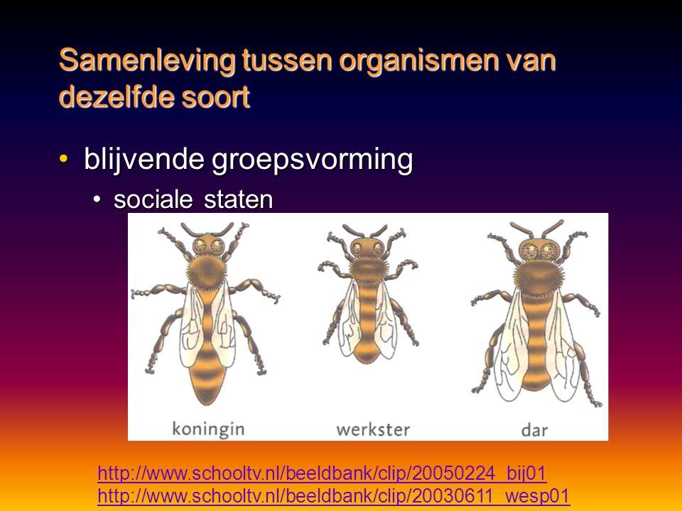 •blijvende groepsvorming •sociale staten Samenleving tussen organismen van dezelfde soort http://www.schooltv.nl/beeldbank/clip/20050224_bij01 http://