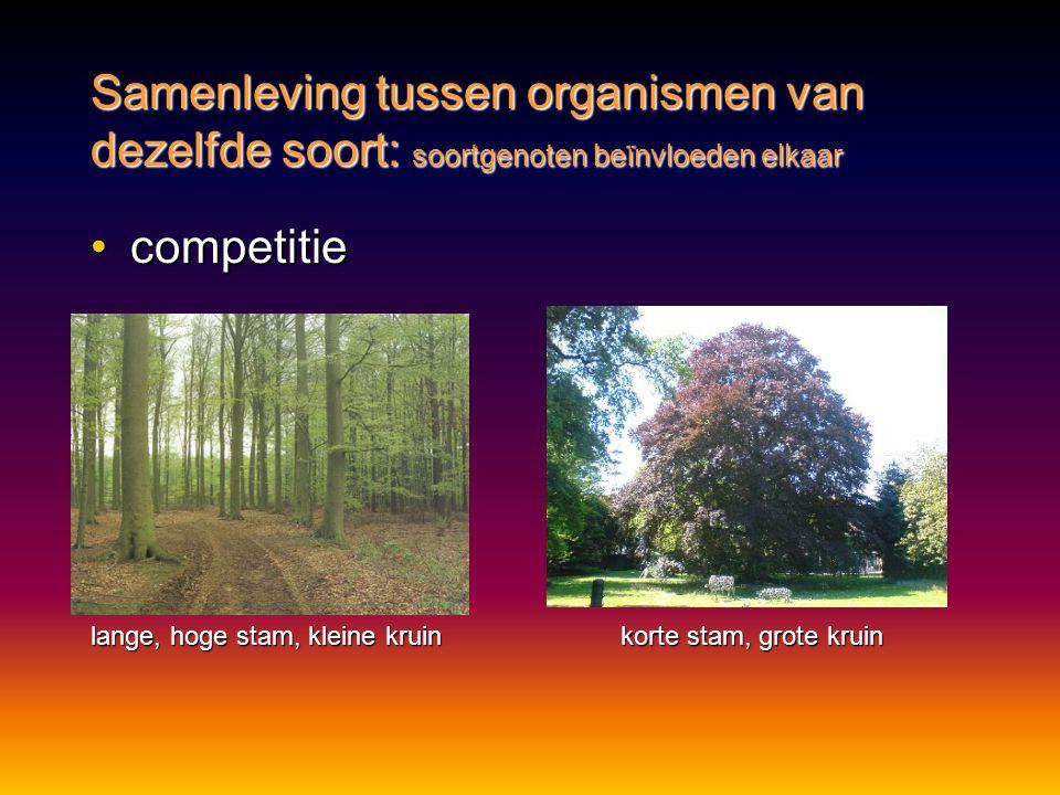 Samenleving tussen organismen van dezelfde soort: soortgenoten beïnvloeden elkaar •competitie lange, hoge stam, kleine kruinkorte stam, grote kruin
