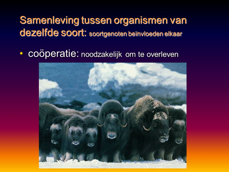 •coöperatie: noodzakelijk om te overleven Samenleving tussen organismen van dezelfde soort: soortgenoten beïnvloeden elkaar