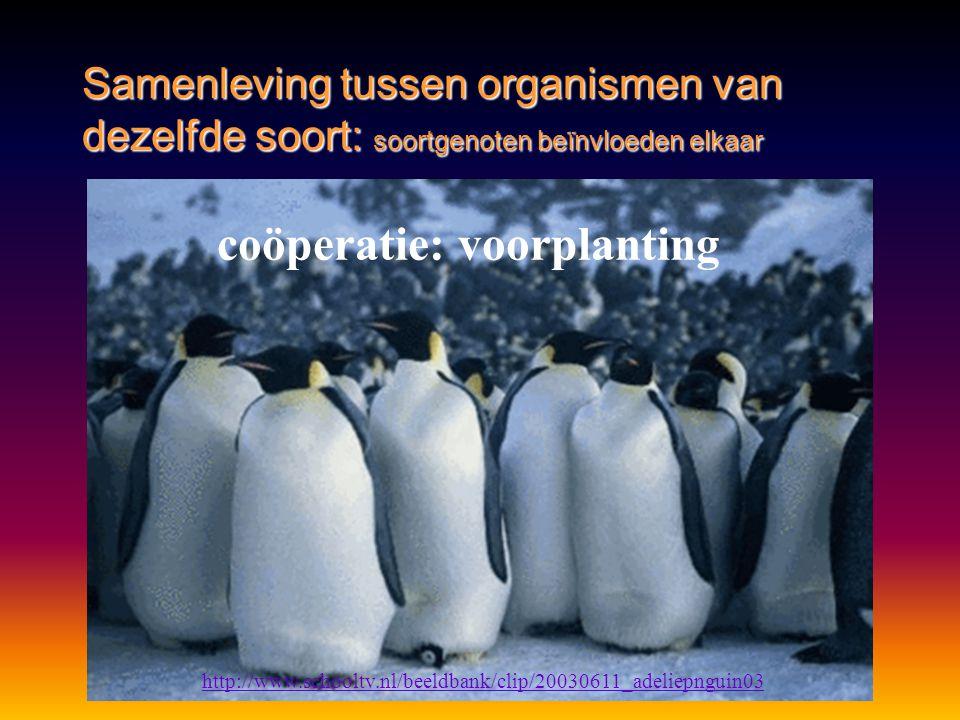 coöperatie: voorplanting http://www.schooltv.nl/beeldbank/clip/20030611_adeliepnguin03