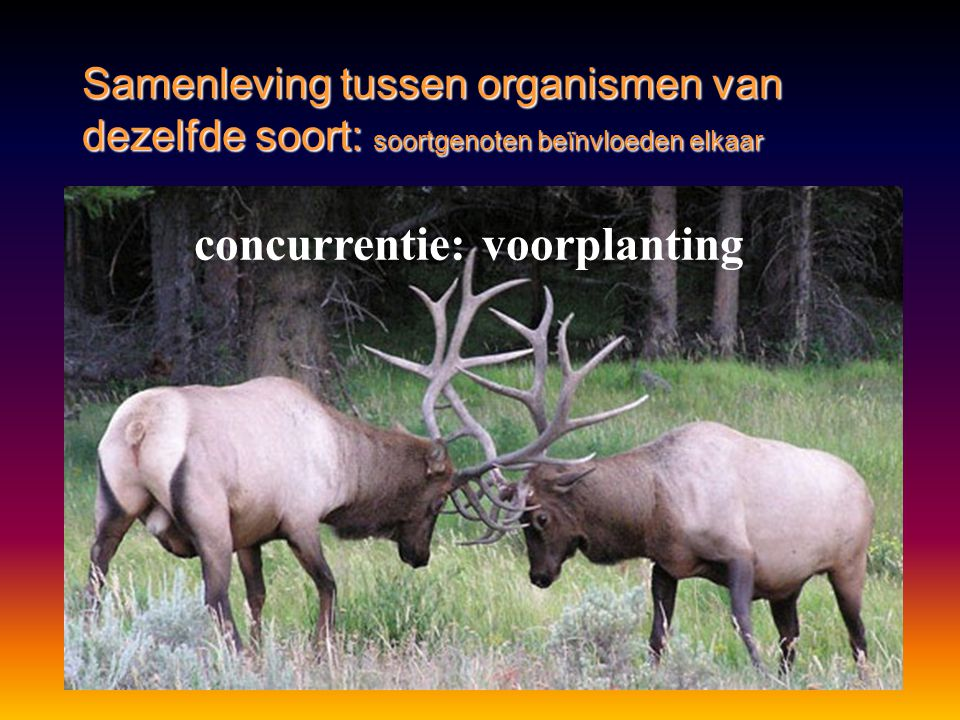 Samenleving tussen organismen van dezelfde soort: soortgenoten beïnvloeden elkaar concurrentie: voorplanting