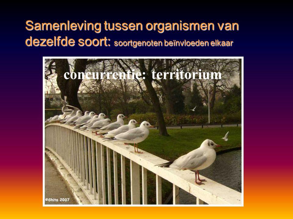 •blijvende groepsvorming •sociale staten Samenleving tussen organismen van dezelfde soort http://www.schooltv.nl/beeldbank/clip/20050224_bij01 http://www.schooltv.nl/beeldbank/clip/20030611_wesp01
