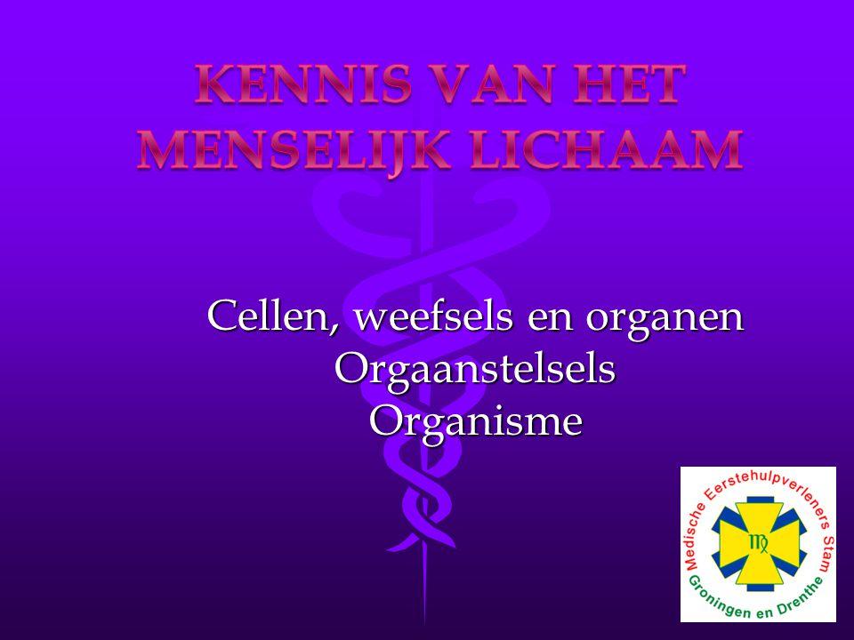 Cellen, weefsels en organen OrgaanstelselsOrganisme