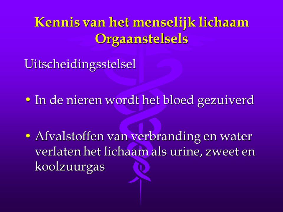 Uitscheidingsstelsel •In de nieren wordt het bloed gezuiverd •Afvalstoffen van verbranding en water verlaten het lichaam als urine, zweet en koolzuurgas