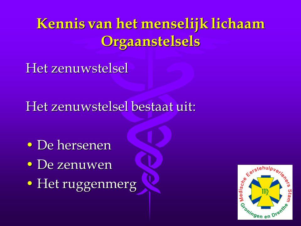 Kennis van het menselijk lichaam Orgaanstelsels Het zenuwstelsel Het zenuwstelsel bestaat uit: •De hersenen •De zenuwen •Het ruggenmerg