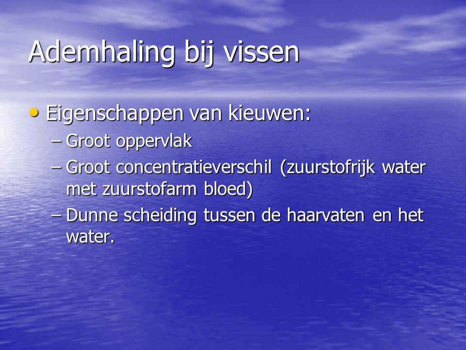 Ademhaling bij vissen • Eigenschappen van kieuwen: –Groot oppervlak –Groot concentratieverschil (zuurstofrijk water met zuurstofarm bloed) –Dunne sche