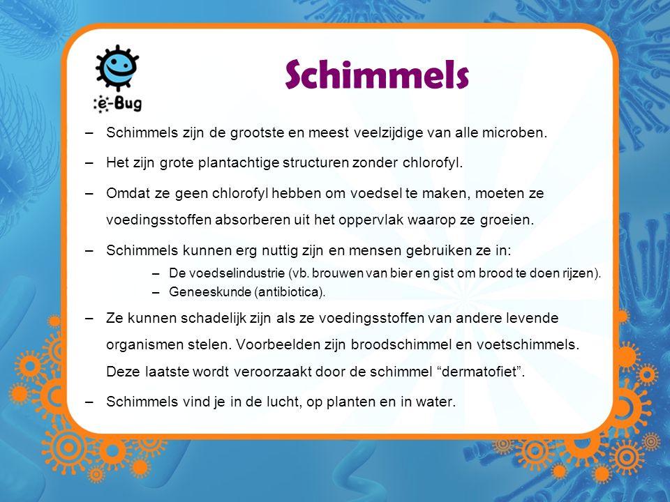 Schimmels –Schimmels zijn de grootste en meest veelzijdige van alle microben. –Het zijn grote plantachtige structuren zonder chlorofyl. –Omdat ze geen