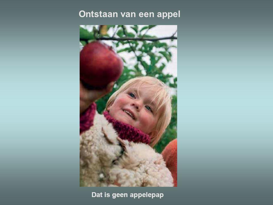 Ontstaan van een appel Dat is geen appelepap