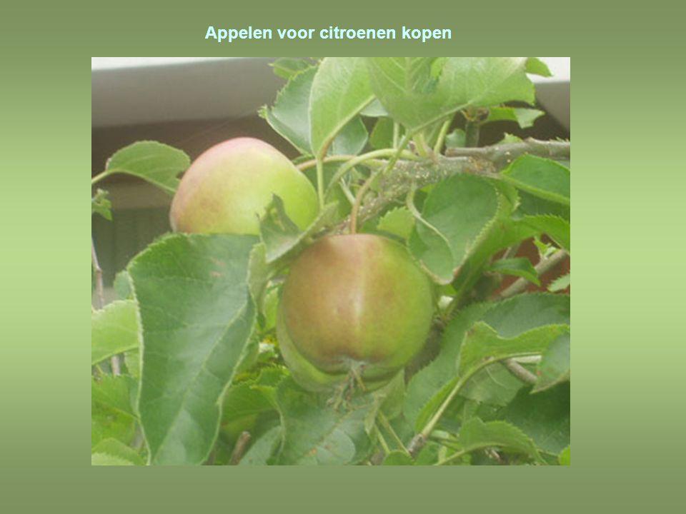 Door een zure appel heen bijten