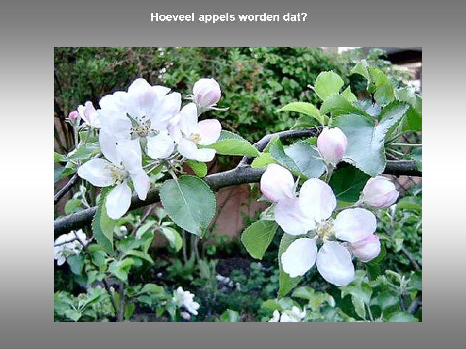 Hoeveel appels worden dat?