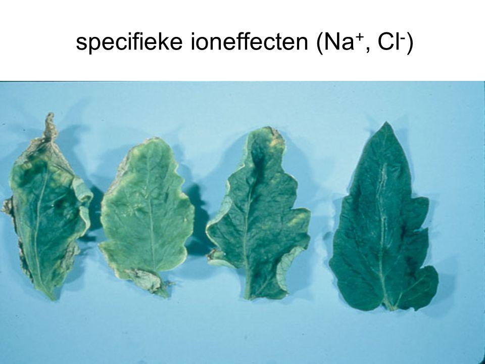 specifieke ioneffecten (Na +, Cl - )