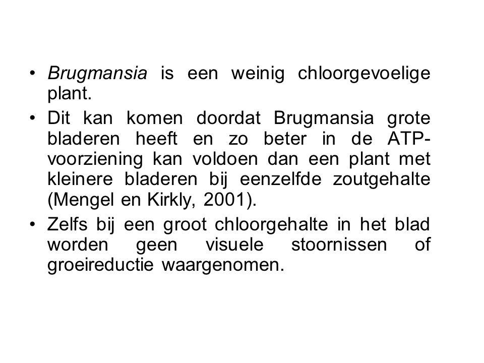 •Brugmansia is een weinig chloorgevoelige plant. •Dit kan komen doordat Brugmansia grote bladeren heeft en zo beter in de ATP- voorziening kan voldoen