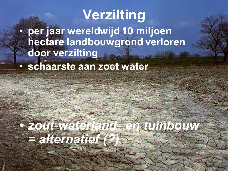 Verzilting •per jaar wereldwijd 10 miljoen hectare landbouwgrond verloren door verzilting •schaarste aan zoet water •zout-waterland- en tuinbouw = alt