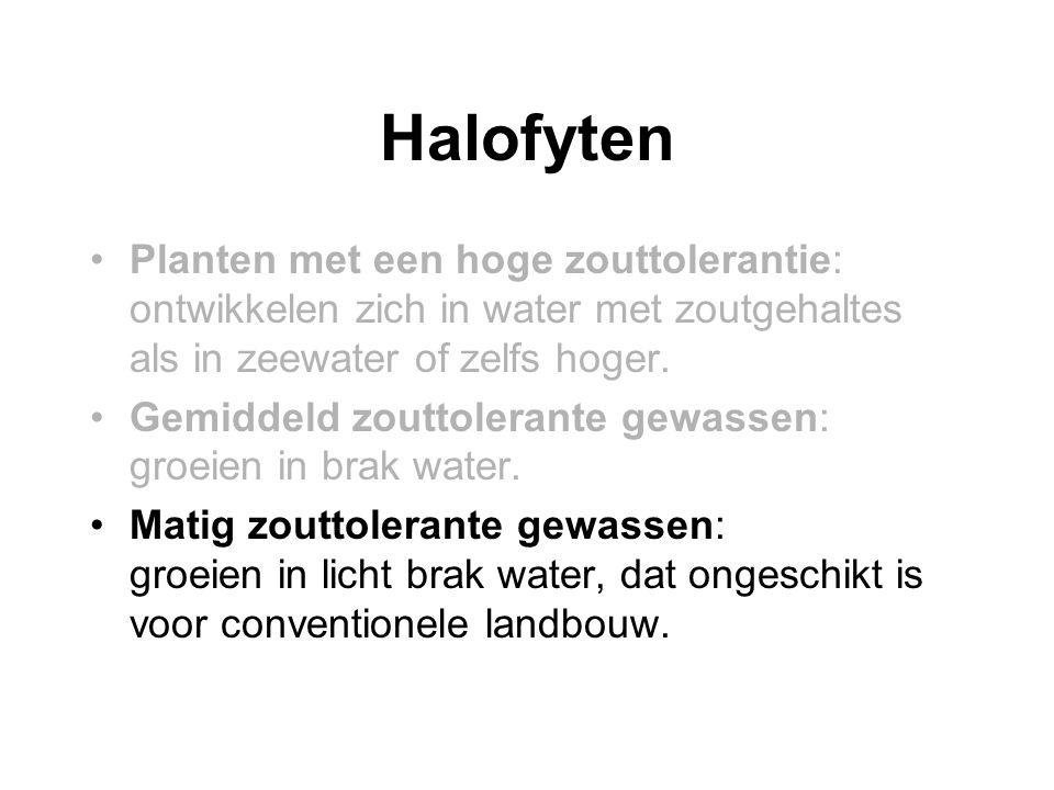 Halofyten •Planten met een hoge zouttolerantie: ontwikkelen zich in water met zoutgehaltes als in zeewater of zelfs hoger. •Gemiddeld zouttolerante ge