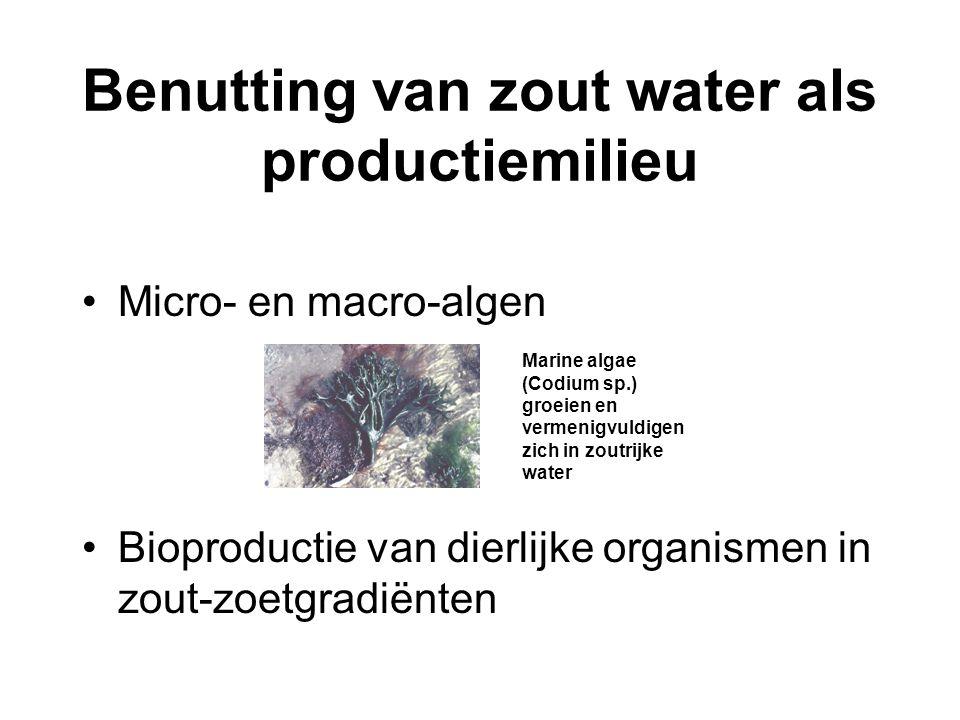 Benutting van zout water als productiemilieu •Micro- en macro-algen •Bioproductie van dierlijke organismen in zout-zoetgradiënten Marine algae (Codium
