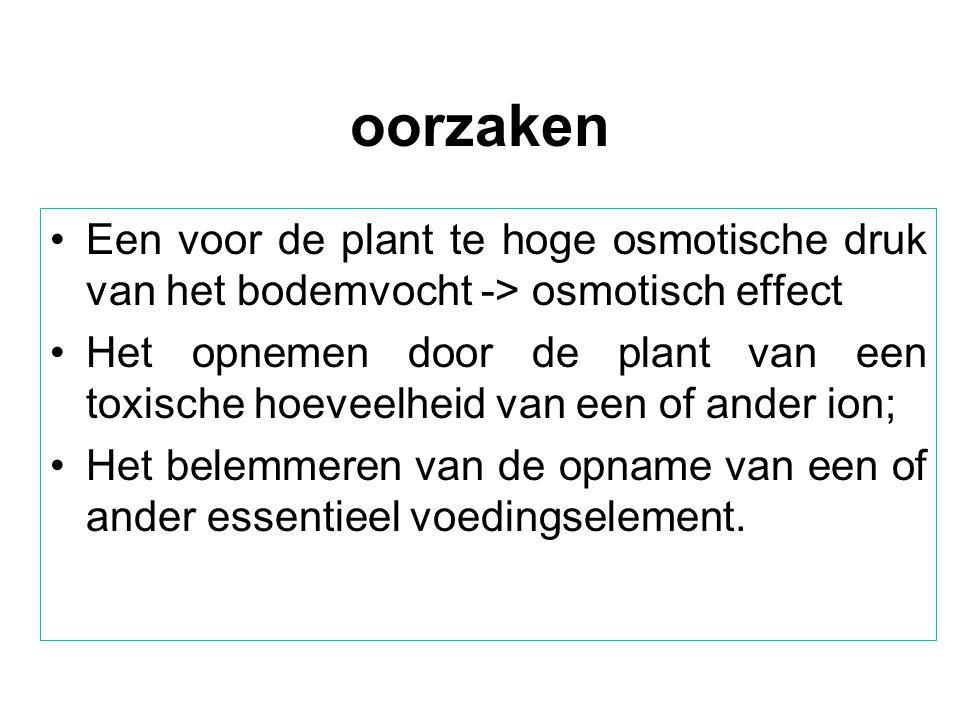 oorzaken •Een voor de plant te hoge osmotische druk van het bodemvocht -> osmotisch effect •Het opnemen door de plant van een toxische hoeveelheid van