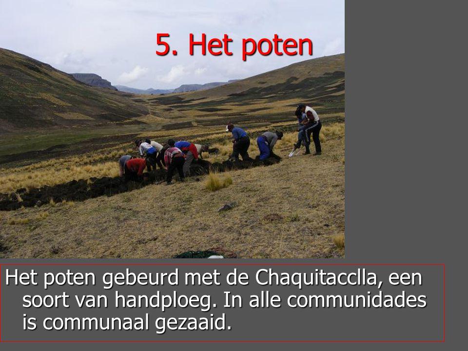 Het poten gebeurd met de Chaquitacclla, een soort van handploeg.