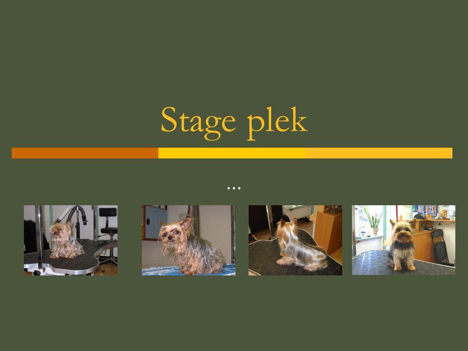 Stage plek …