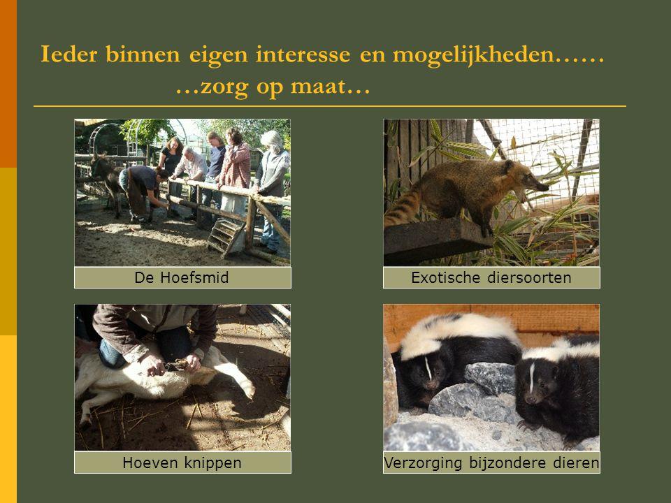 Ieder binnen eigen interesse en mogelijkheden…… …zorg op maat… Verzorging bijzondere dierenHoeven knippen De HoefsmidExotische diersoorten
