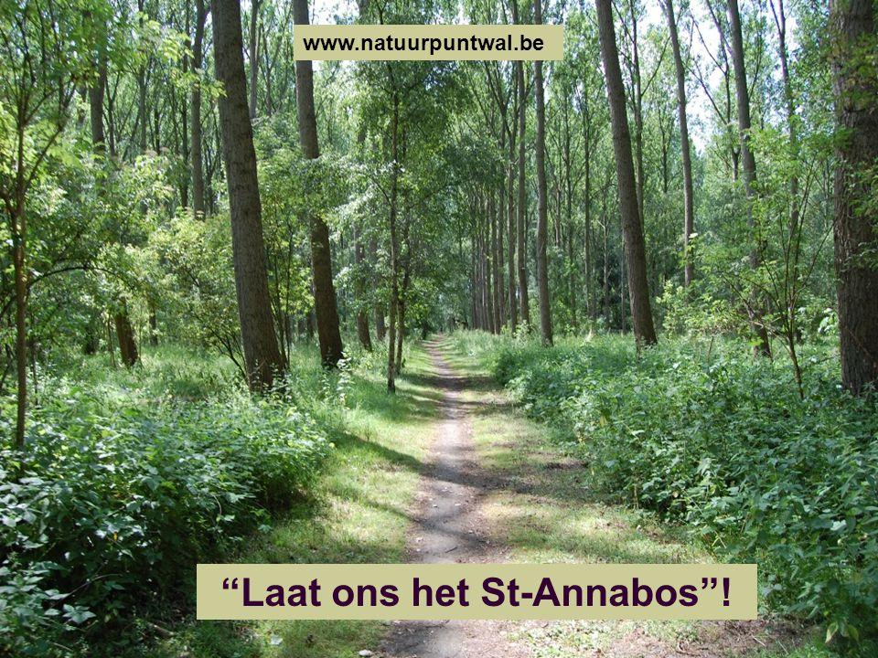 """""""Laat ons het St-Annabos""""! www.natuurpuntwal.be"""