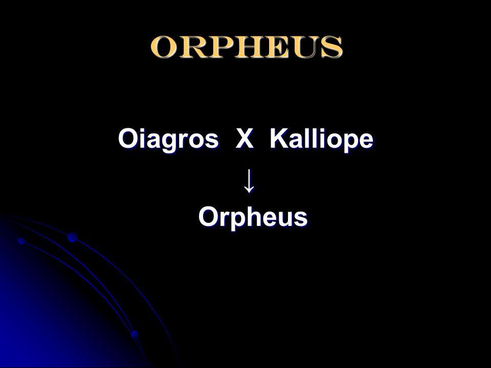 orpheus Oiagros X Kalliope ↓ Orpheus Orpheus