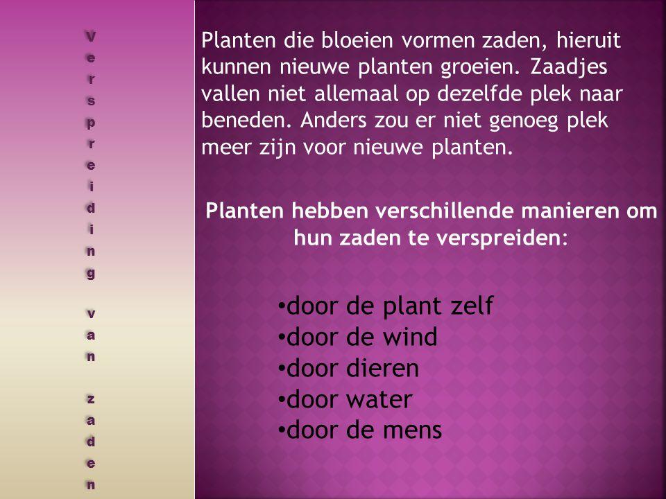 Planten die bloeien vormen zaden, hieruit kunnen nieuwe planten groeien. Zaadjes vallen niet allemaal op dezelfde plek naar beneden. Anders zou er nie