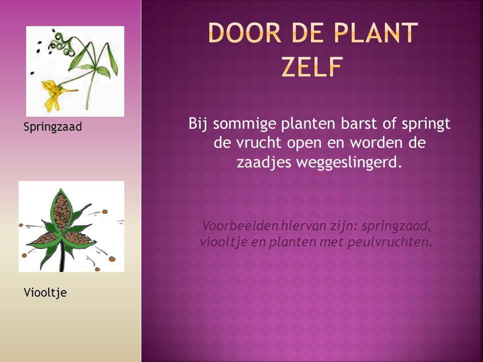 Bij sommige planten barst of springt de vrucht open en worden de zaadjes weggeslingerd. Springzaad Voorbeelden hiervan zijn: springzaad, viooltje en p
