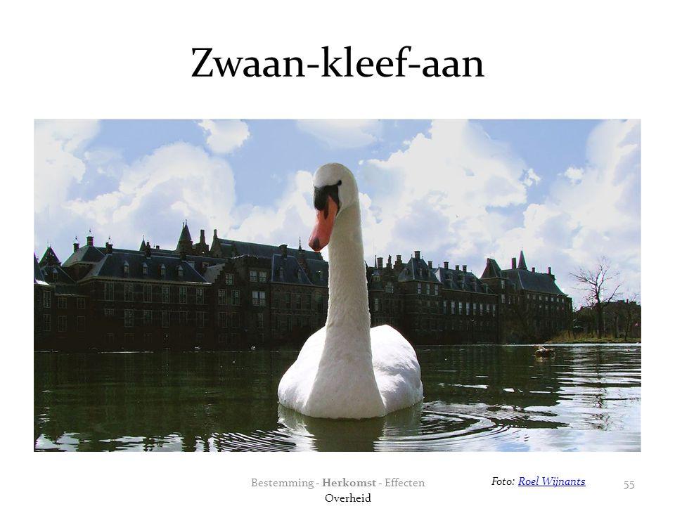 Zwaan-kleef-aan Foto: Roel WijnantsRoel Wijnants Bestemming - Herkomst - Effecten Overheid 55